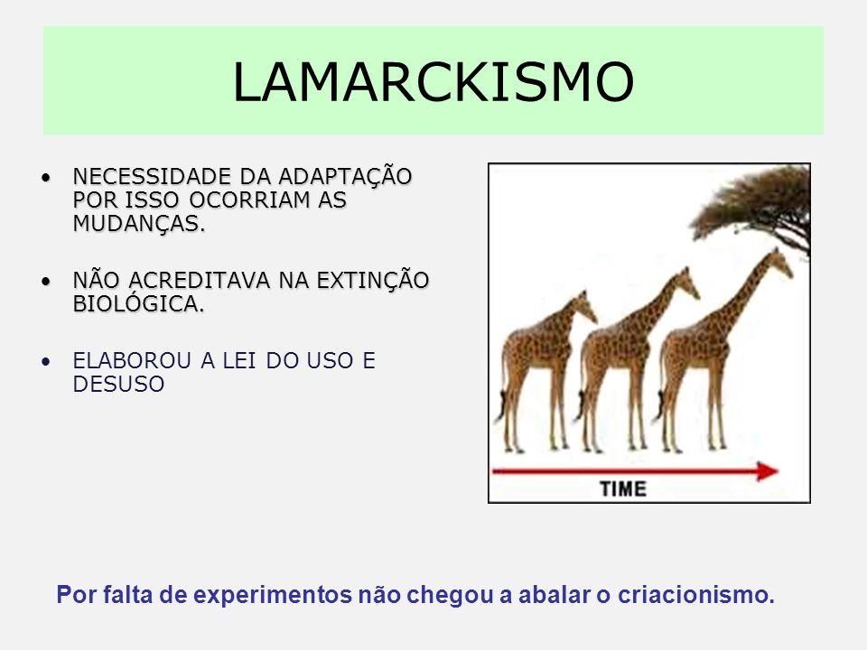 EVOLUCIONISTAS Lamarck (1744 – 1829)Charles Darwin (1809 – 1882)