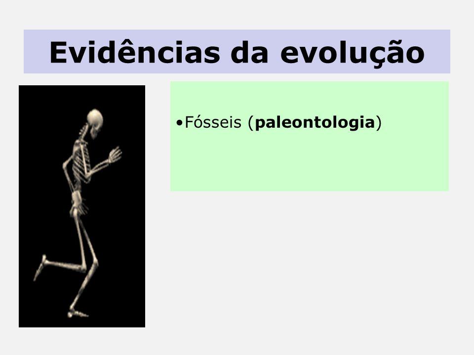 Evidências da evolução Fósseis (paleontologia)