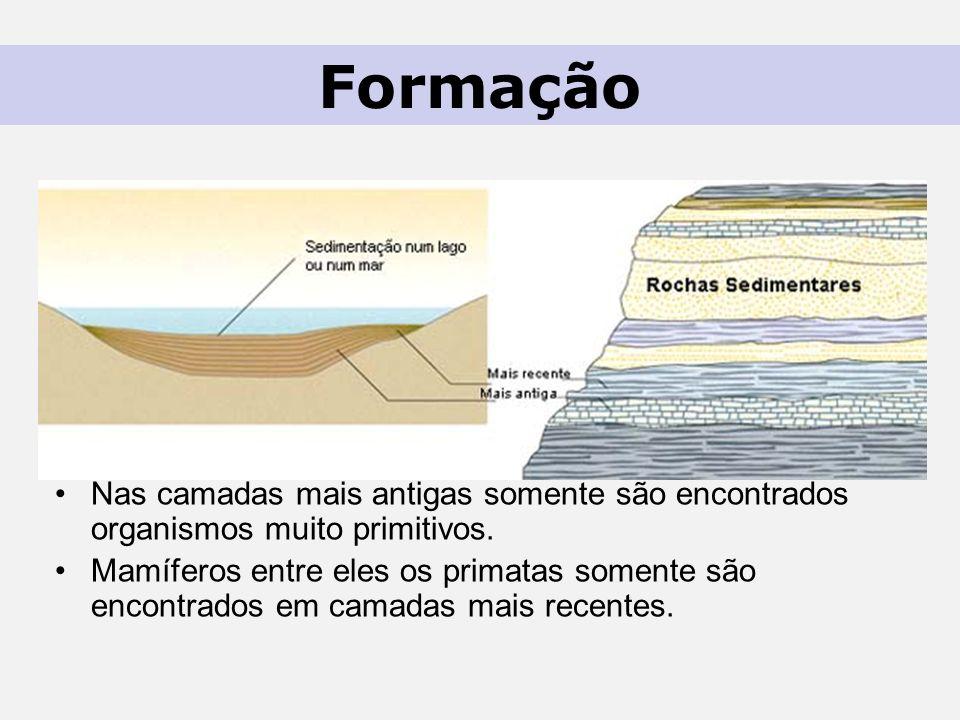 Nas camadas mais antigas somente são encontrados organismos muito primitivos.