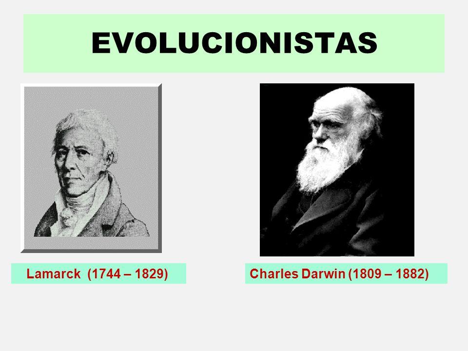 Conhecer organismos que viveram na Terra em tempos remotos. Fornecer indícios de parentesco com as espécies atuais. Conhecer a morfologia de espécies