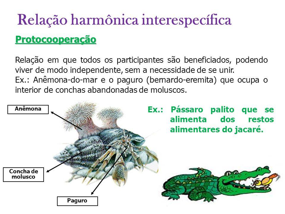 Protocooperação Relação em que todos os participantes são beneficiados, podendo viver de modo independente, sem a necessidade de se unir. Ex.: Anêmona