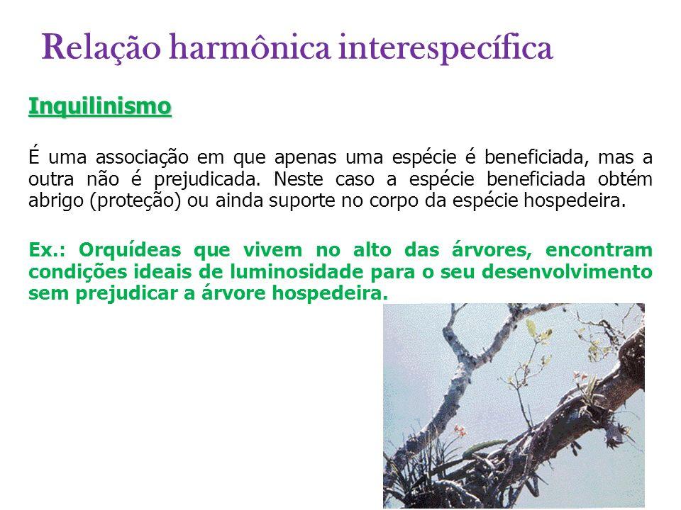 Inquilinismo É uma associação em que apenas uma espécie é beneficiada, mas a outra não é prejudicada. Neste caso a espécie beneficiada obtém abrigo (p