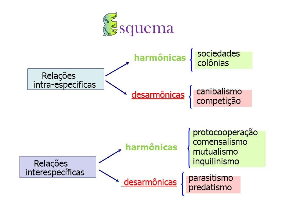 Relações intra-específicas harmônicas desarmônicas sociedades colônias canibalismo competição Relações interespecíficas harmônicas desarmônicas desarm