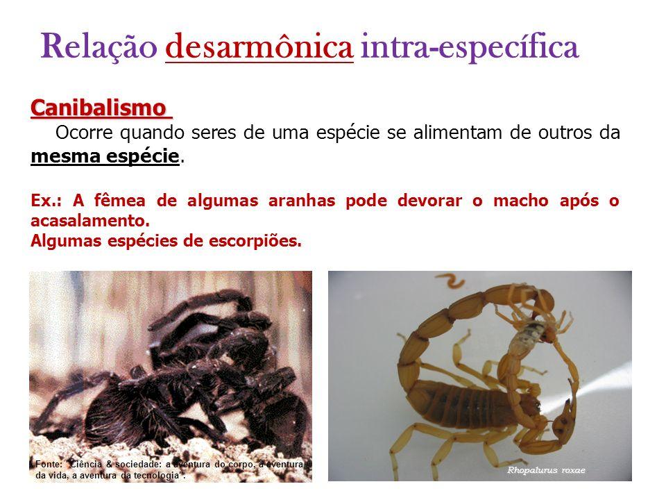 Canibalismo Ocorre quando seres de uma espécie se alimentam de outros da mesma espécie. Ex.: A fêmea de algumas aranhas pode devorar o macho após o ac