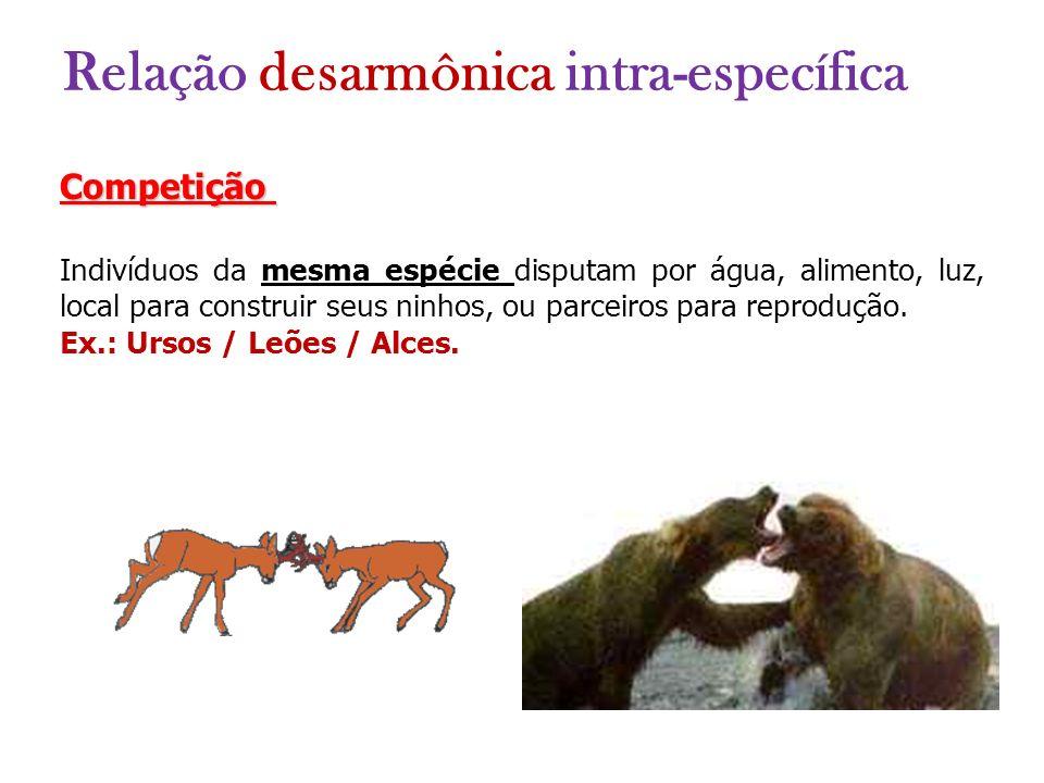 Competição Indivíduos da mesma espécie disputam por água, alimento, luz, local para construir seus ninhos, ou parceiros para reprodução. Ex.: Ursos /