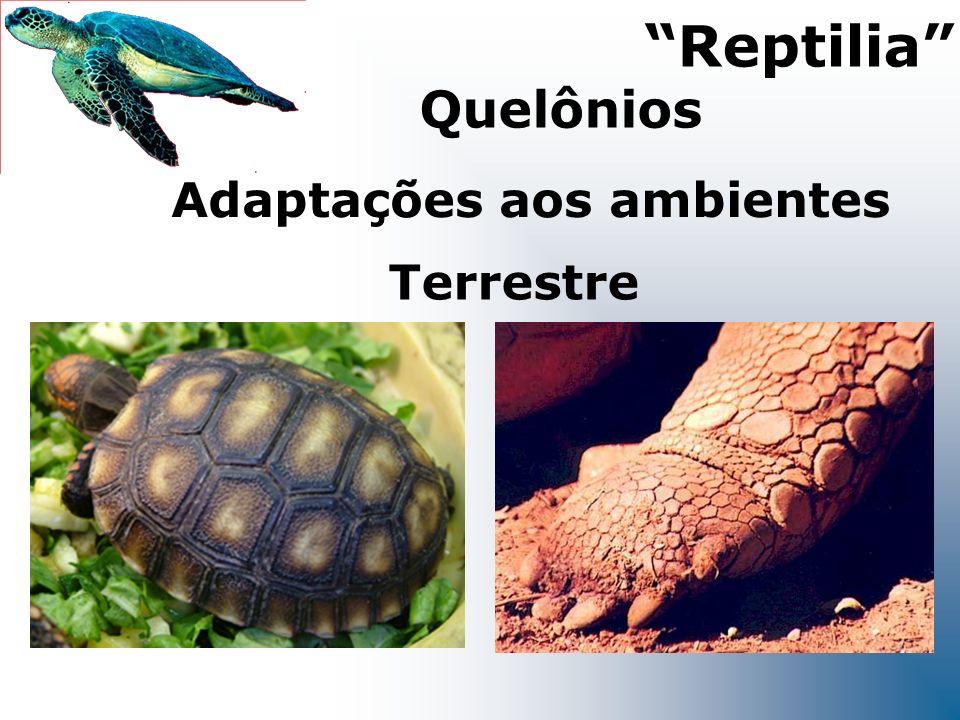Terrestre Adaptações aos ambientes Reptilia Quelônios