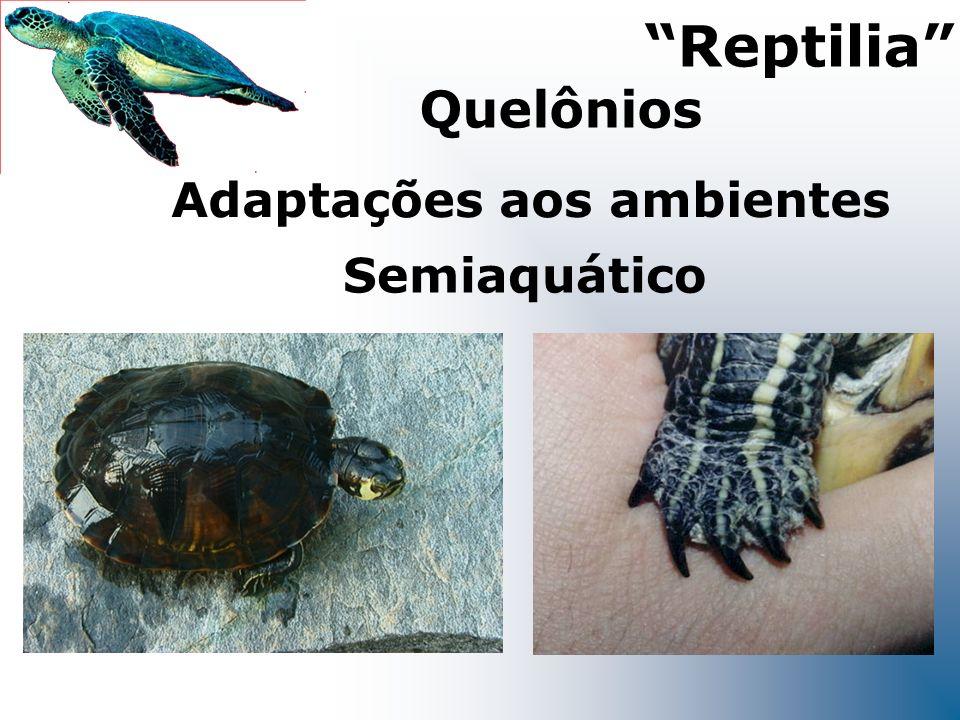 Semiaquático Adaptações aos ambientes Reptilia Quelônios