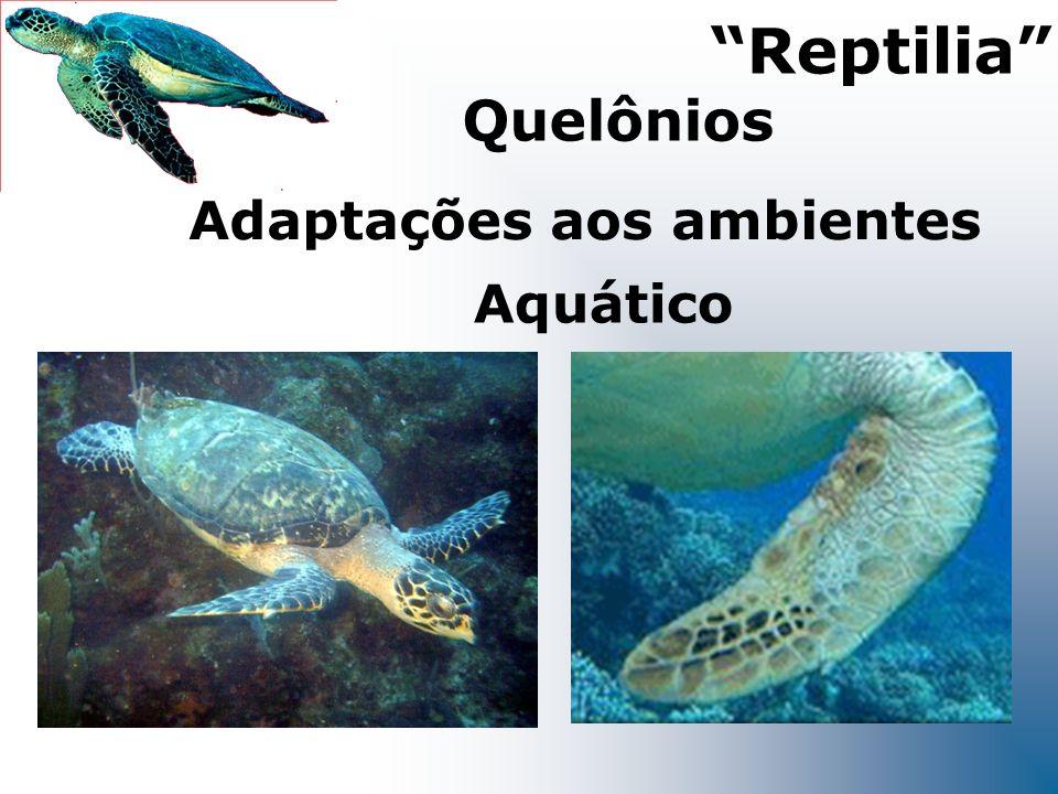 Aquático Adaptações aos ambientes Reptilia Quelônios