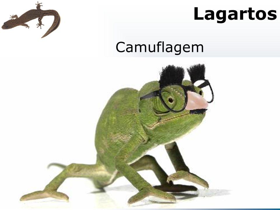 Camuflagem Lagartos