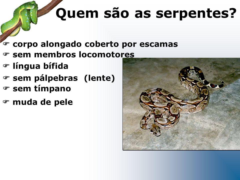 sem pálpebras (lente) sem tímpano língua bífida corpo alongado coberto por escamas sem membros locomotores muda de pele Quem são as serpentes?