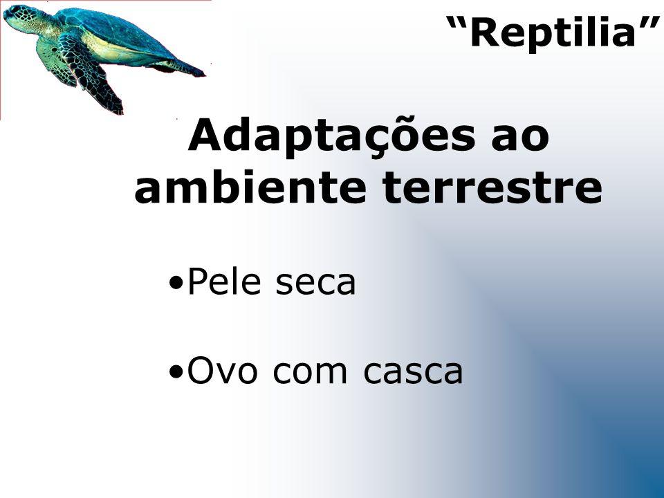 Adaptações ao ambiente terrestre Pele seca Ovo com casca Reptilia