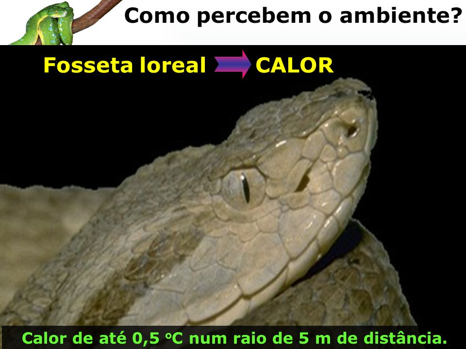 Fosseta loreal CALOR Calor de até 0,5 o C num raio de 5 m de distância. Como percebem o ambiente?
