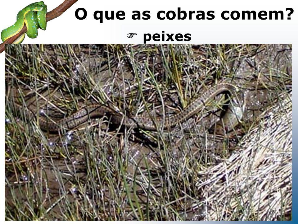peixes O que as cobras comem?