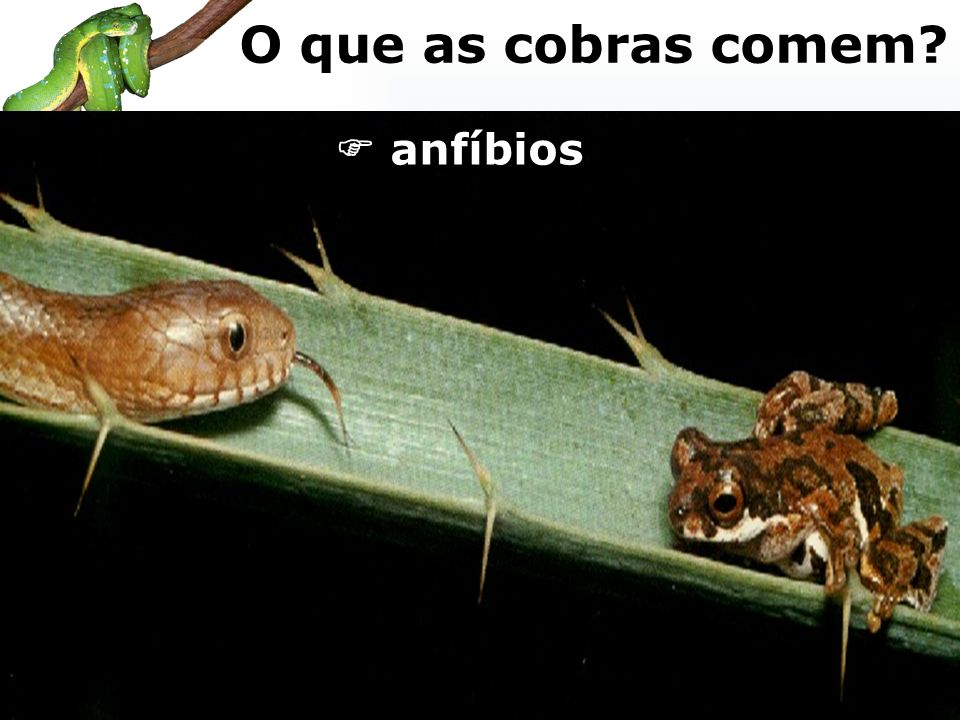 anfíbios O que as cobras comem?