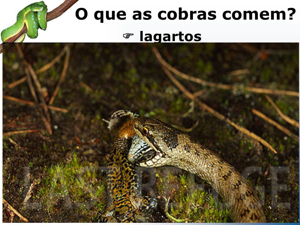 serpentes O que as cobras comem?