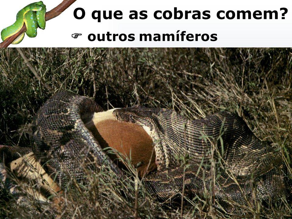 outros mamíferos O que as cobras comem?
