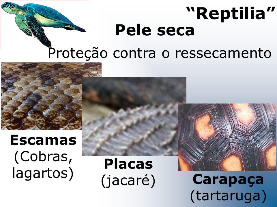 Pele seca Proteção contra o ressecamento Reptilia Escamas (Cobras, lagartos) Placas (jacaré) Carapaça (tartaruga)