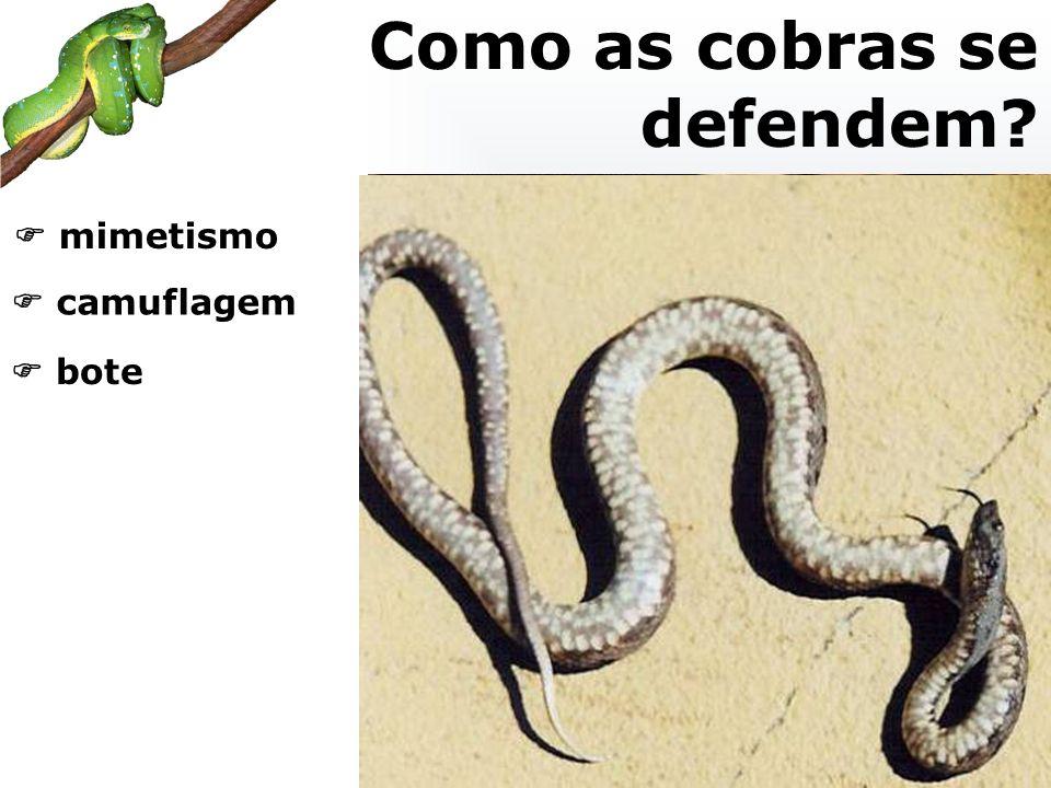 mimetismo camuflagem bote Como as cobras se defendem?