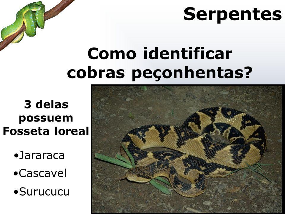 3 delas possuem Fosseta loreal Como identificar cobras peçonhentas? Serpentes Jararaca Cascavel Surucucu