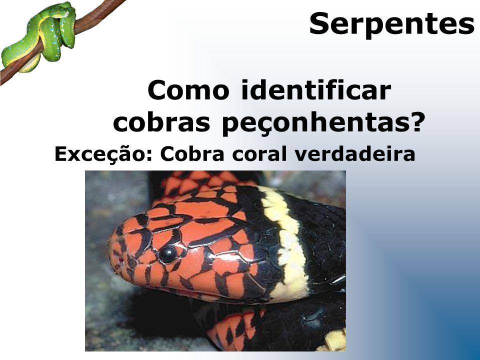 Exceção: Cobra coral verdadeira Como identificar cobras peçonhentas? Serpentes