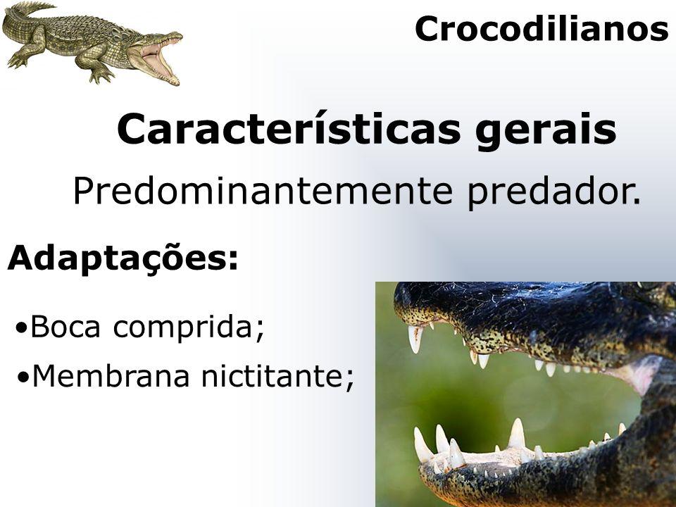 Características gerais Boca comprida; Predominantemente predador. Adaptações: Crocodilianos Membrana nictitante;
