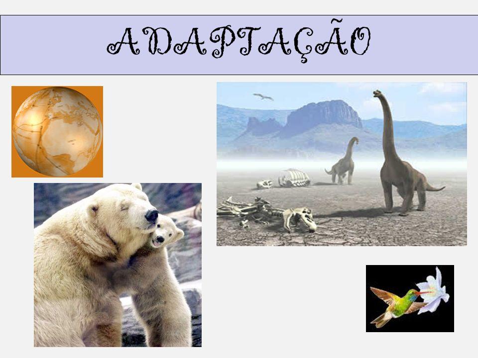 SABER ISTO É IMPORTANTE ADAPTAÇÃO É o ajustamento que todos os organismos apresentam em relação ao ambiente em que vive.