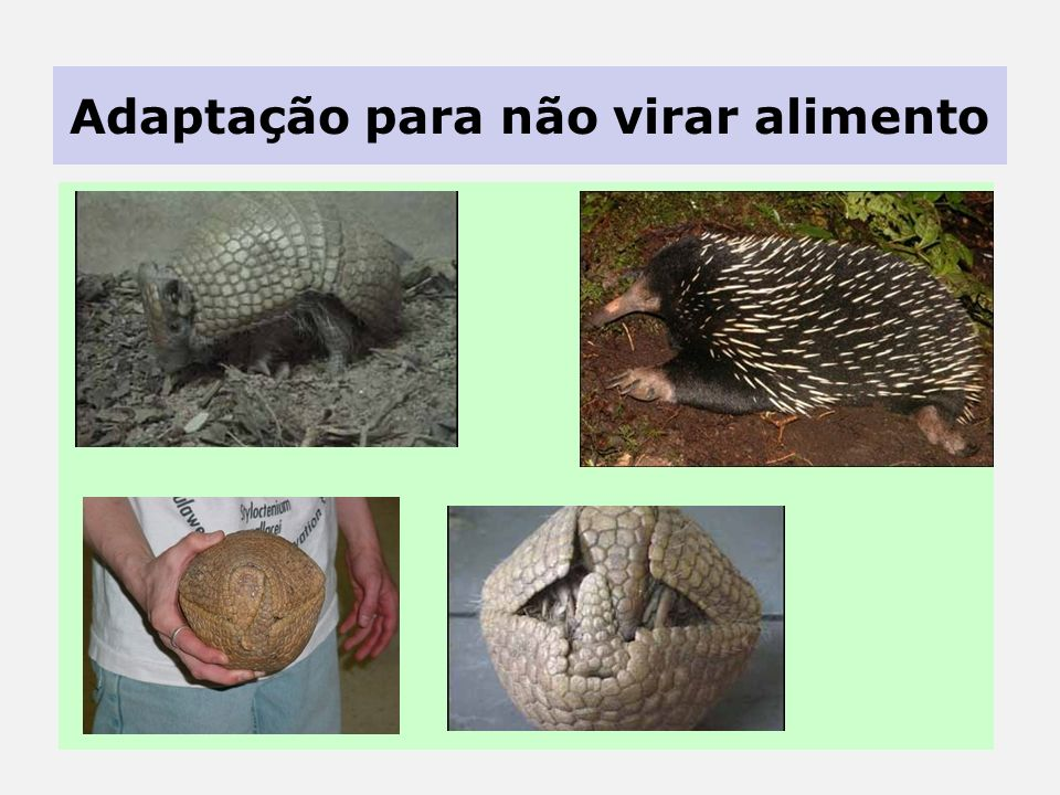 Adaptação para propagar a espécie