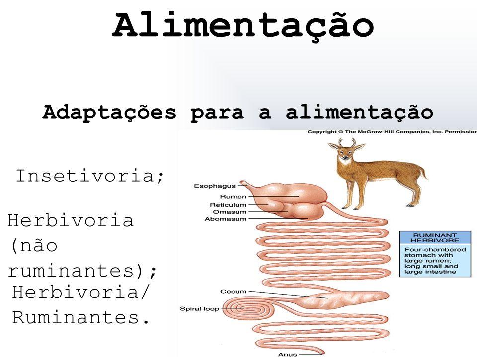 Adaptações para a alimentação Insetivoria; Herbivoria (não ruminantes); Herbivoria/ Ruminantes. Alimentação