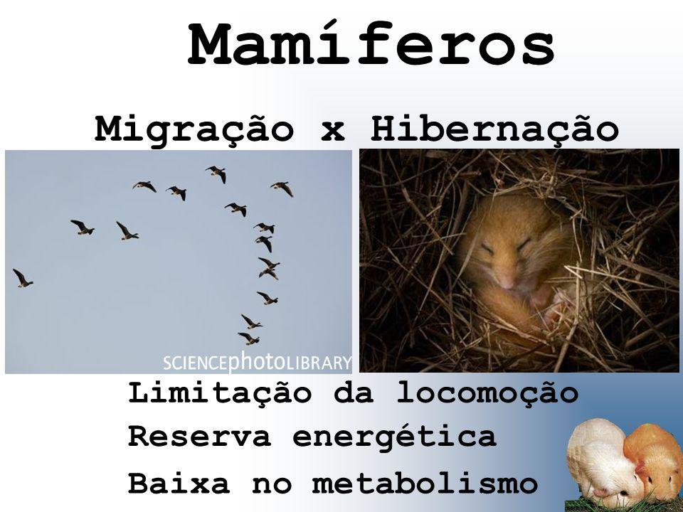 Migração x Hibernação Limitação da locomoção Reserva energética Baixa no metabolismo Mamíferos