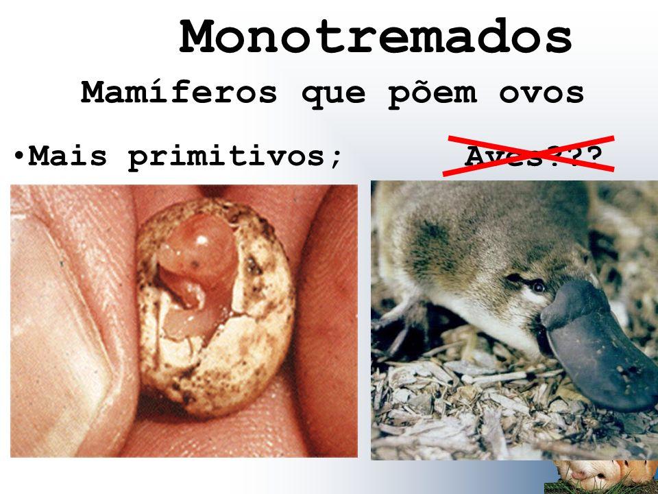 Monotremados Mais primitivos; Aves??? Mamíferos que põem ovos