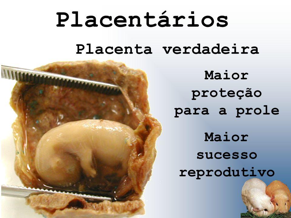 Placentários Placenta verdadeira Maior proteção para a prole Maior sucesso reprodutivo