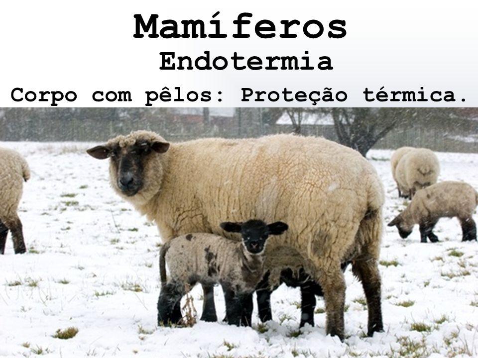 Endotermia Corpo com pêlos: Proteção térmica. Mamíferos