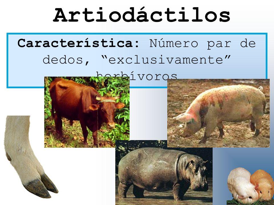Característica: Número par de dedos, exclusivamente herbívoros Artiodáctilos