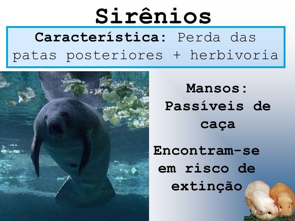 Característica: Perda das patas posteriores + herbivoria Mansos: Passíveis de caça Encontram-se em risco de extinção Sirênios