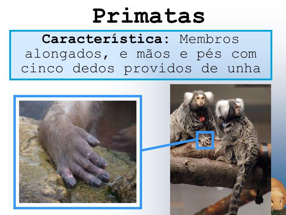 Característica: Membros alongados, e mãos e pés com cinco dedos providos de unha Primatas