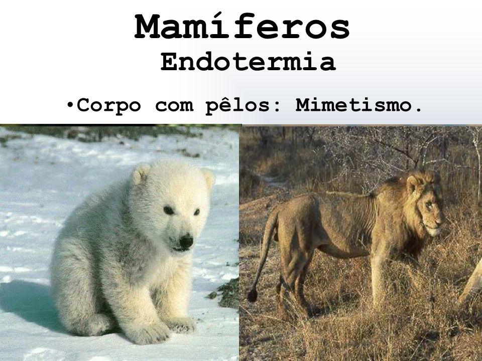 Corpo com pêlos: Mimetismo. Endotermia Mamíferos