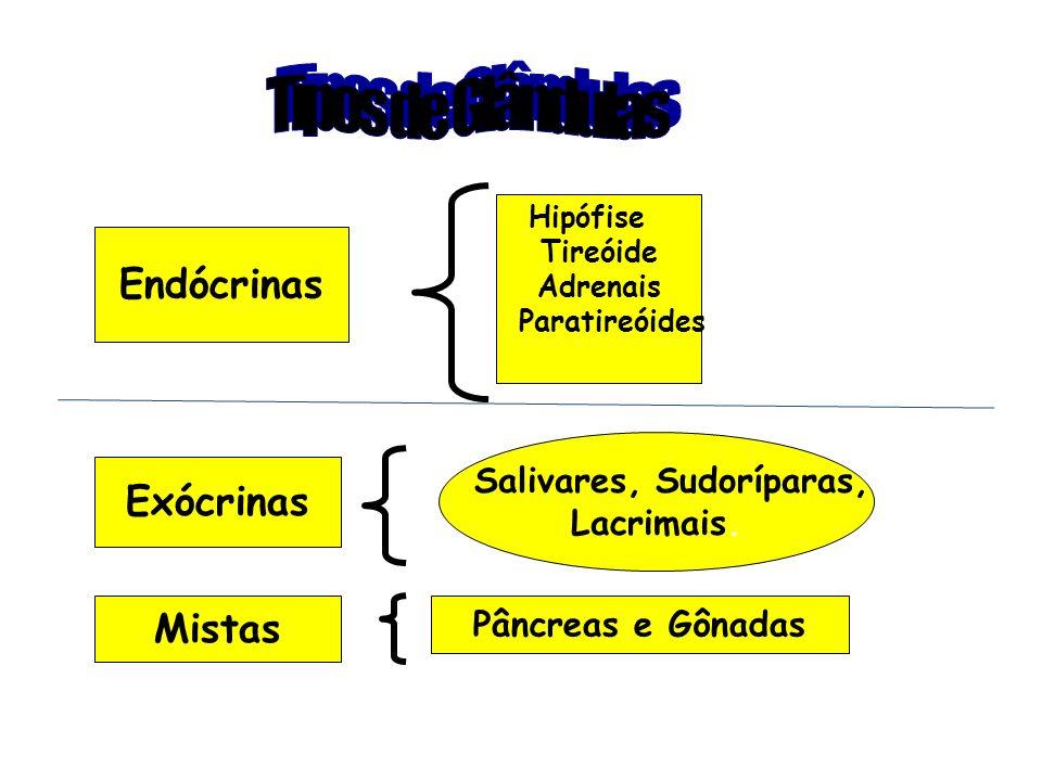 Endócrinas Hipófise Tireóide Adrenais Paratireóides Exócrinas Salivares, Sudoríparas, Lacrimais. Mistas Pâncreas e Gônadas