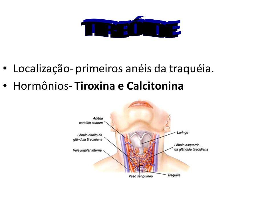 Localização- primeiros anéis da traquéia. Hormônios- Tiroxina e Calcitonina