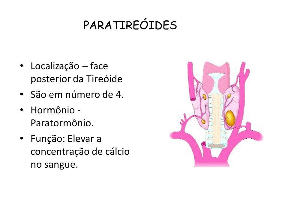Localização – face posterior da Tireóide São em número de 4. Hormônio - Paratormônio. Função: Elevar a concentração de cálcio no sangue. PARATIREÓIDES