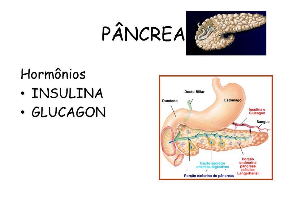 PÂNCREAS Hormônios INSULINA GLUCAGON