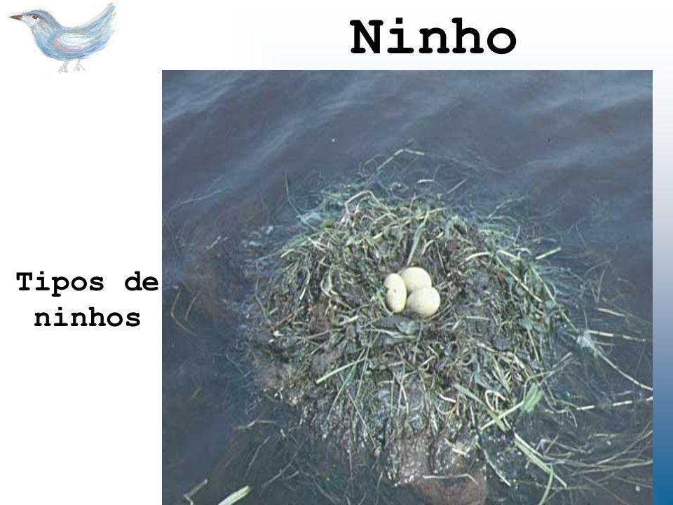 Tipos de ninhos Ninho