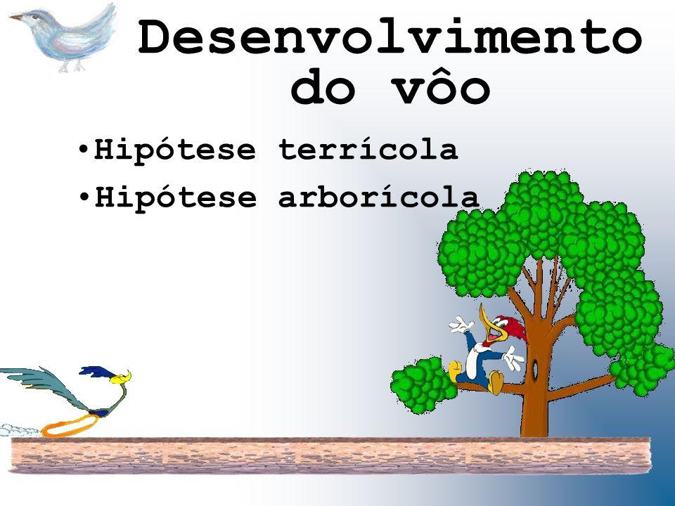 Desenvolvimento do vôo Hipótese terrícola Hipótese arborícola