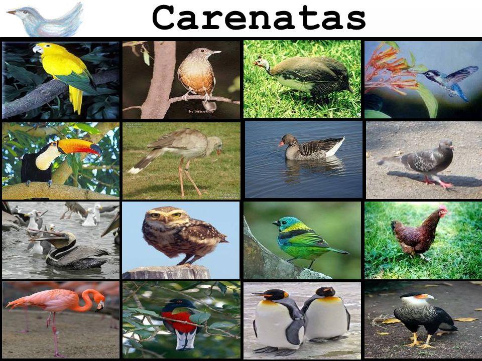 Carenatas