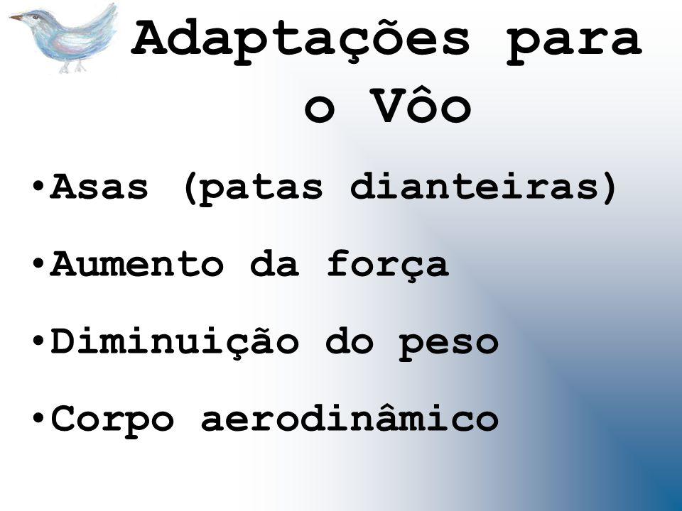 Asas (patas dianteiras) Aumento da força Diminuição do peso Corpo aerodinâmico Adaptações para o Vôo
