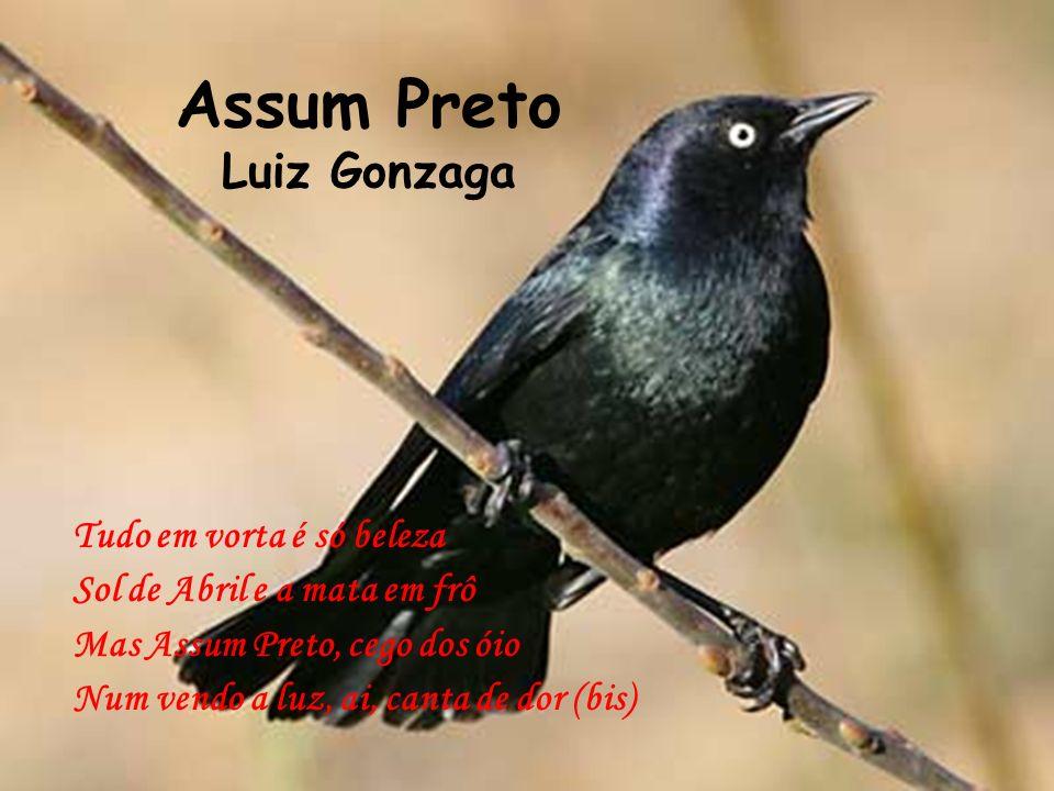 Assum Preto Luiz Gonzaga Tudo em vorta é só beleza Sol de Abril e a mata em frô Mas Assum Preto, cego dos óio Num vendo a luz, ai, canta de dor (bis)