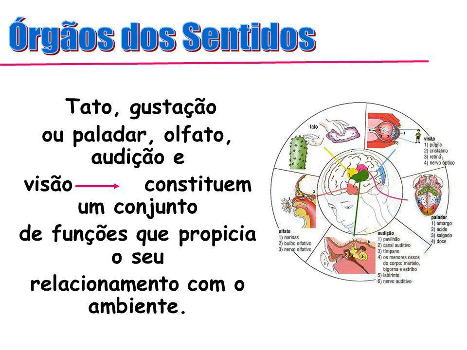 Os Órgãos dos Sentidos - Audição …………………………………………………..