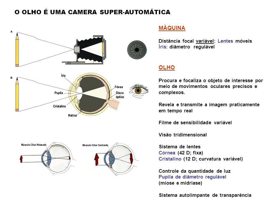 HIPERMETROPIA Olho pequeno ou cristalino achatado, a imagem se forma depois da retina A formação da imagem depende: Forma do globo ocular Forma das le