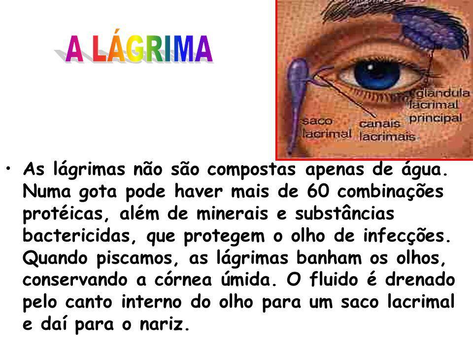 ÍRIS – parte colorida do olho