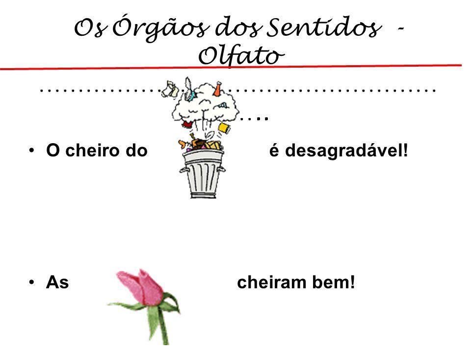 Os Órgãos dos Sentidos - Olfato …………………………………………… …….. O cheiro do é desagradável! As cheiram bem!