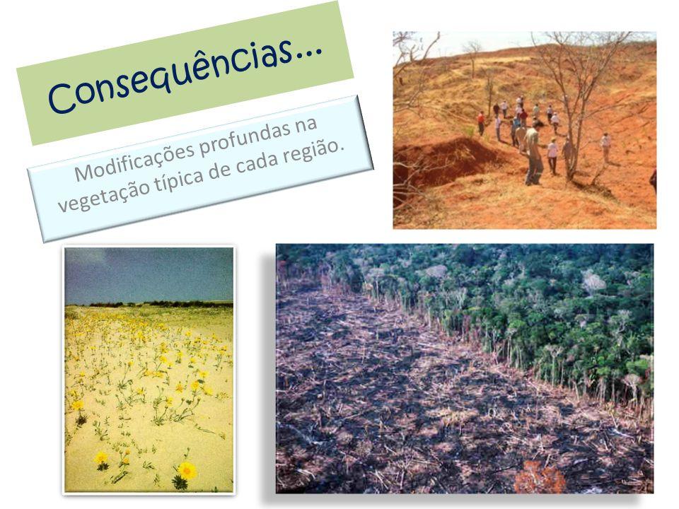 Consequências... Modificações profundas na vegetação típica de cada região.
